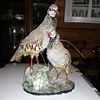 Taxidermy Tuesday A Pair OLf Red-Legged Partridges On A Nice Base