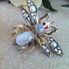 Super big winged insect victorian moonstones brooch.