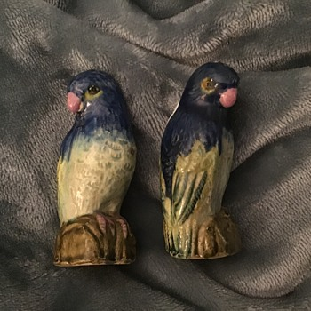 Old budgie salt and pepper  - Animals