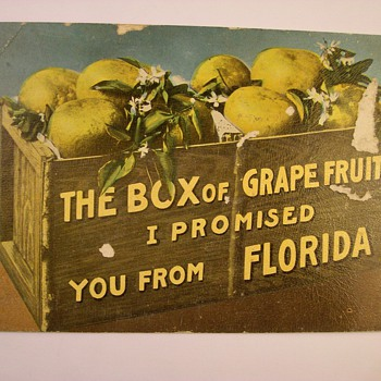 Greetings From Florida Postcard Circa 1886?? - Postcards
