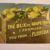 Greetings From Florida Postcard Circa 1886??