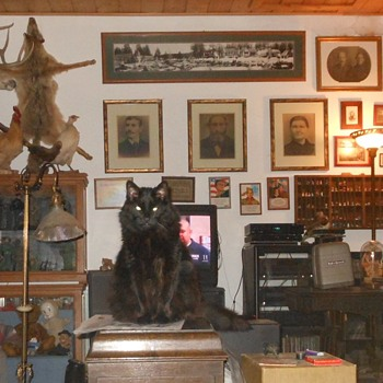 Carson the Cat and Count the Collectibles - Photographs