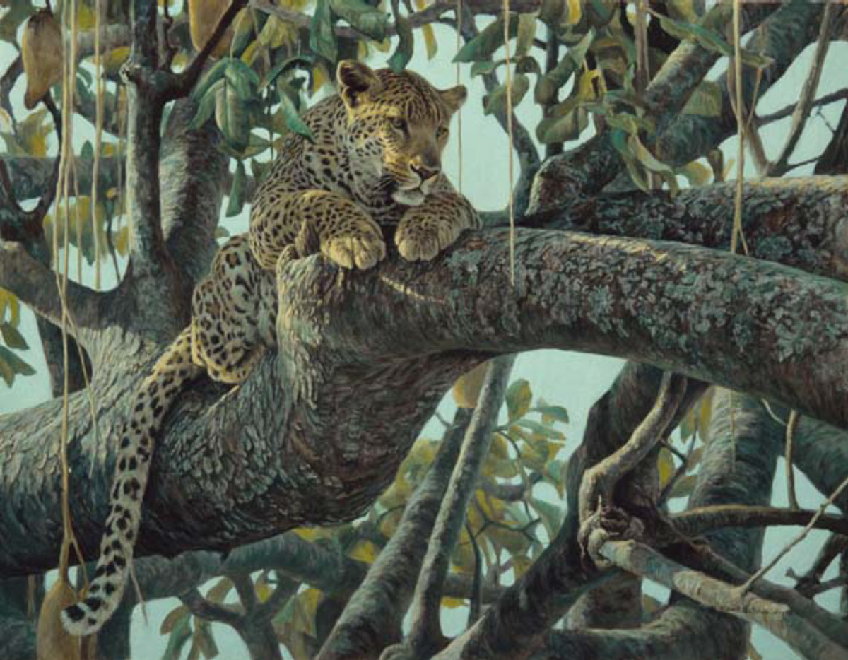 Robert Bateman Leopard In A Sausage Tree Quot Signed