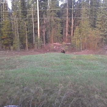 Bears and Bucks - Photographs