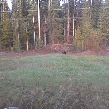 Bears and Bucks