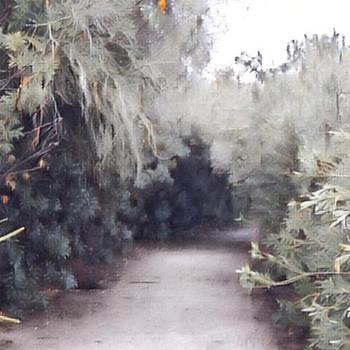 Shade Beneath a  Desert Tree - Fine Art