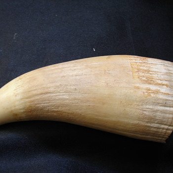 Several Whales Teeth? - Animals