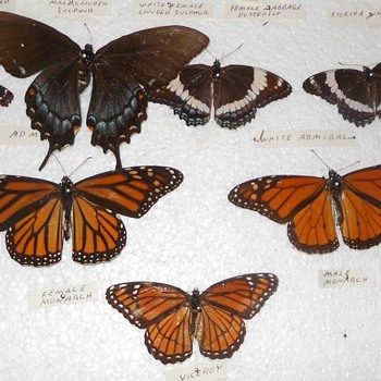 The Ultimate Butterfly Collection Part Two - Animals