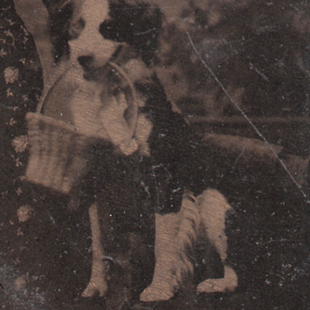 Tintype Dog with a Basket Studio Prop or Good Dog! - Animals