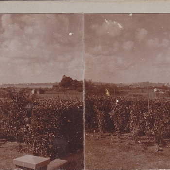 Stereoview - Private35 - Photographs