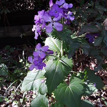more random springtime flowery prettiness - Photographs