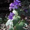 more random springtime flowery prettiness