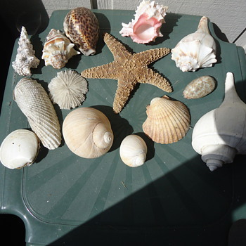 DOROTHY SEA SHELL COLLECTION.