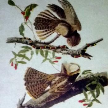 "My ""Sort of"" Audubon - Advertising"
