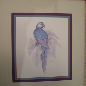 Blue Parrot by 'Harrison' - Posters and Prints