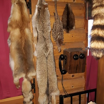 Inside the Old Trapper's Log Cabin - Animals