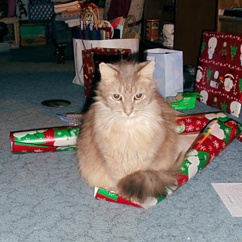 Oskar The Cat.....Christmas Eve 2017 - Animals