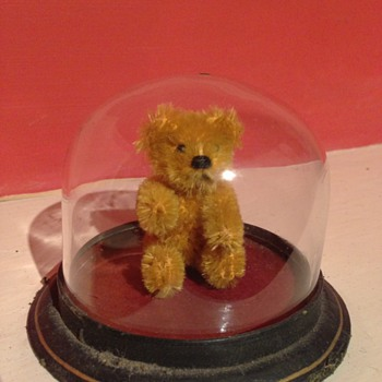A old tiny teddy in a glass case - Animals