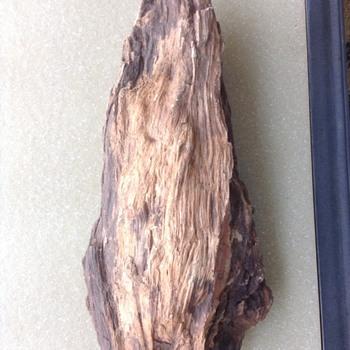 Large piece of petrified wood - Fine Jewelry