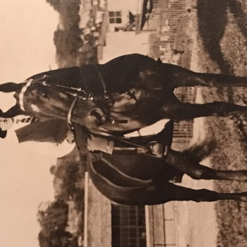 Old Kentucky Horse Picture