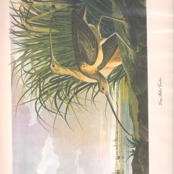 Audubon Prints - Posters and Prints
