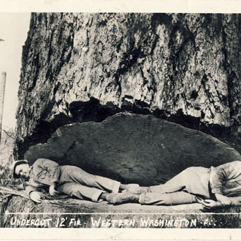 Fir chopping in Washington - Postcards