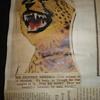 Ca. 1932 Frederick E Loxley Circus Scrapbook