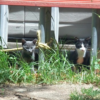 Two Kittens Live Under The Shed - Animals