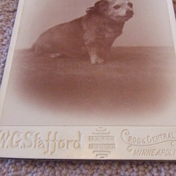 Cabinet card of an overweight dog - Photographs
