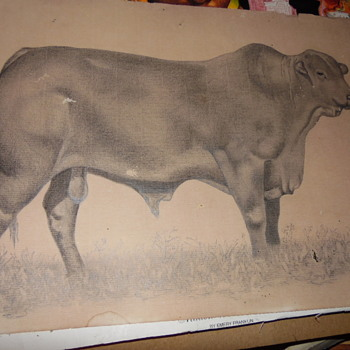 """Antique Pencil Drawing Of Large Bull Signed """"M or R Rossi"""