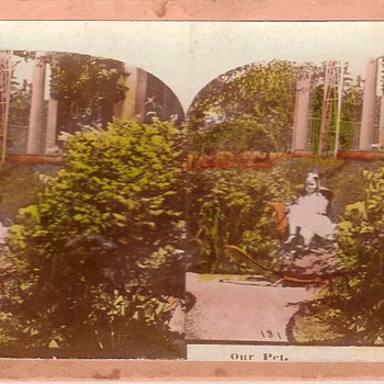 Our Pet - Photographs
