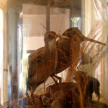 Antique Victorian Large Glass Dome Taxidermy Birds Sandpipers - Animals
