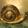 Teeny Little Snail - Made in Japan