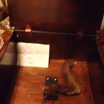 Re-post  Mousetrap with Museum ones and Christie's Auction Eng. Trap - Animals
