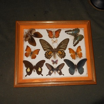 Still Yet Another Butterfly Collection Featuring a Big Moth - Animals