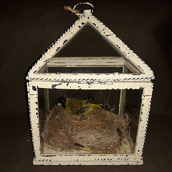 Taxidermy Tuesday Glass Case With Yellow Bird On a Nest - Animals
