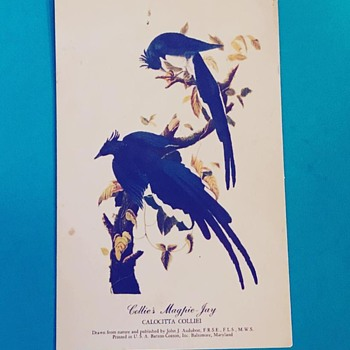 Bird Postage - Postcards