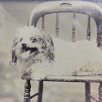 Dog Tin Type - Animals