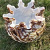 "Victorian brown Peloton glass rose bowl vase with ""snowflake"" type rim"