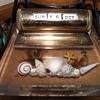 My Desk Calendar--Shells in Acrylic? By Nichols Products