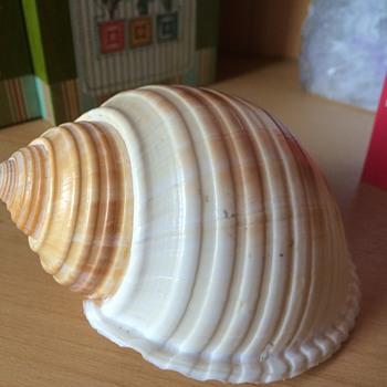 Larger SeaShell