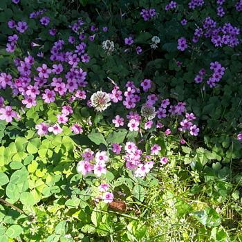 more springtime 'growie/bloomie' things - Photographs
