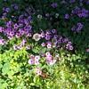 more springtime 'growie/bloomie' things