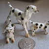 Miniature Dalmatian dogs