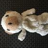 My Favourite Teddy Bear