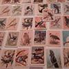 Birds of Australia cards from Tuckfields tea