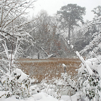 """ Images of Winter"" in Suffolk, Virginia - Fine Art"