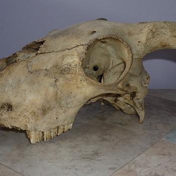 Animal bones mixture
