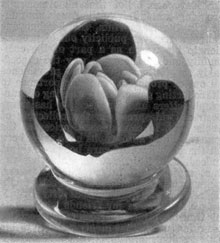 A Typical Rose from Millville: The paperweight, complete with the circular base or foot, is representative of the way the work was finished with those examples that were sold.