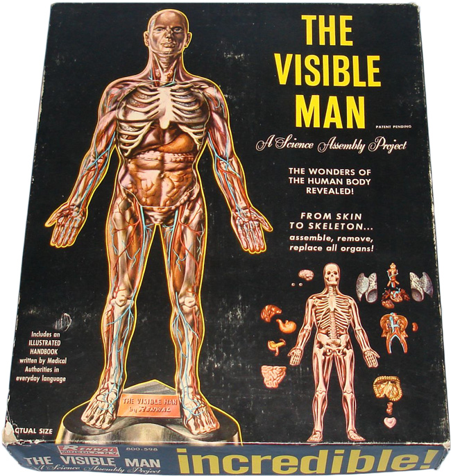 Human Anatomy Model Kit Image collections - human body anatomy